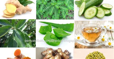 tanaman obat  asam lambung tinggi  mengobati