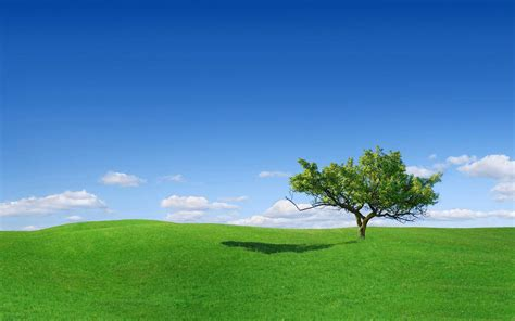 lovely green grass wallpaper