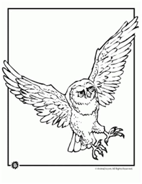 printable barn owl pictures barn owl coloring pages printable printable coloring page