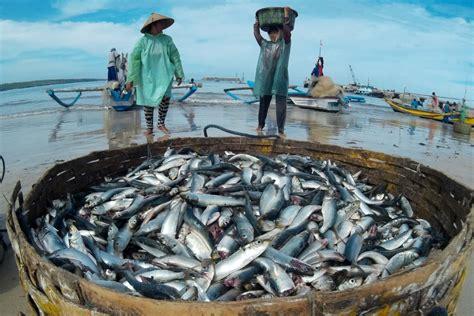 lebih banyak ikan di laut atau bintang di langit kisah kebijakan moratorium dongkrak produktivitas kkp news