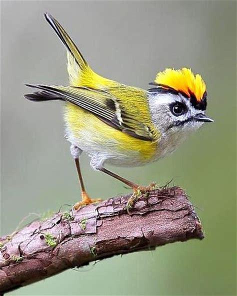 Haver Non Kupas By A D Bird la llegenda bruel aiguamolls