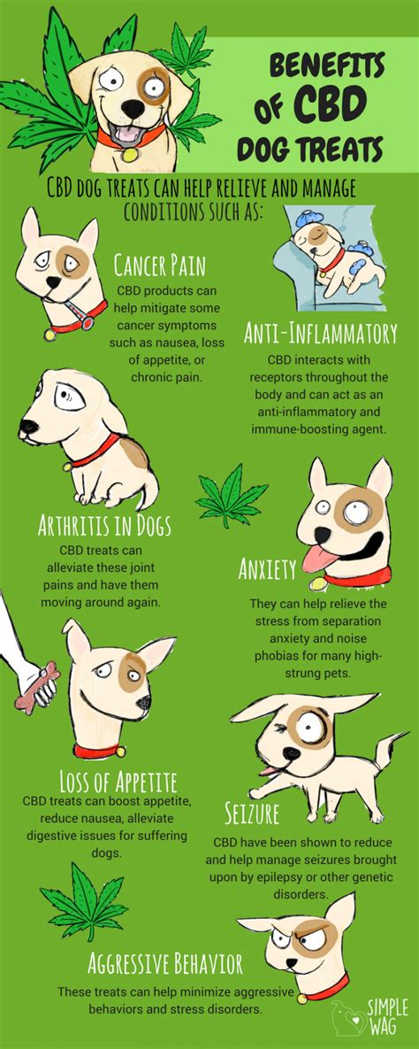 benefits of dogs benefits of cbd treats daily infographic