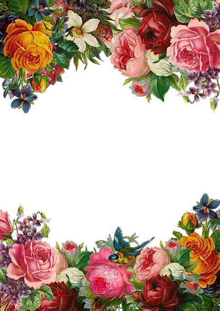 flower rose frame  image  pixabay