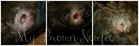 healing dogs stages of pressure sores and wound healing in dogs mybrownnewfies