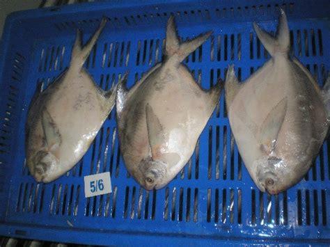 Jual Ekspor Ikan Laut by Gambar 13 Ikan Hias Air Laut Terindah Langka Berbagai