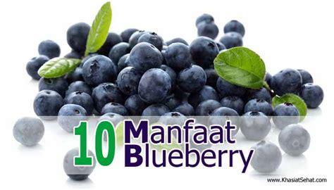 Tanaman Blueberry Sudah Berbuah 10 manfaat buah blueberry untuk kesehatan khasiat sehat