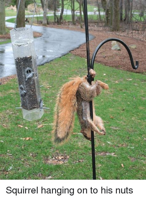 squirrel hanging on to his nuts funny meme on me me