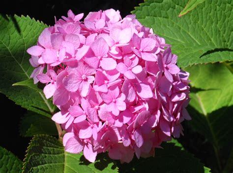 hudson valley resort spa summer flowers bloom in the