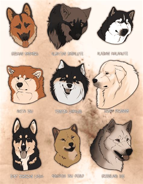 breeds that look like wolves what domestic dogs look like wolves best 2017