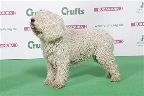 puppy water schedule crufts 2016 results