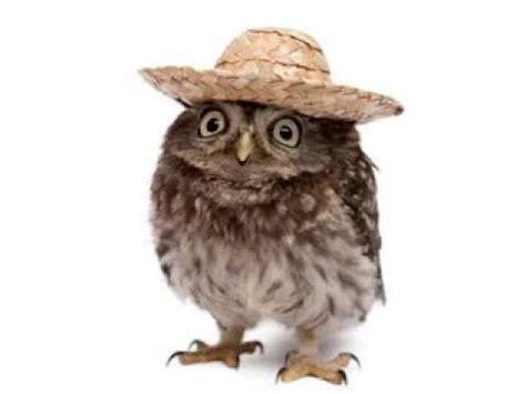Happy Owl Top owl happy birthday song it s