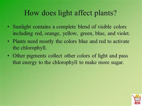 does the color of light affect plant growth what color light do plants grow best in 28 images
