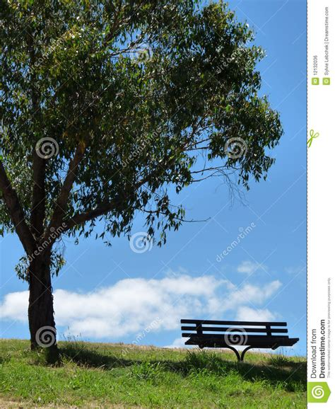 bench under tree bench under the tree royalty free stock image image