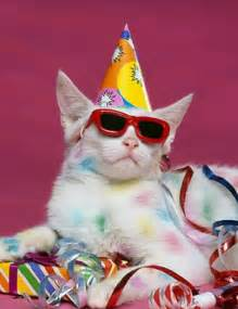 17 best images about party cats on pinterest cats