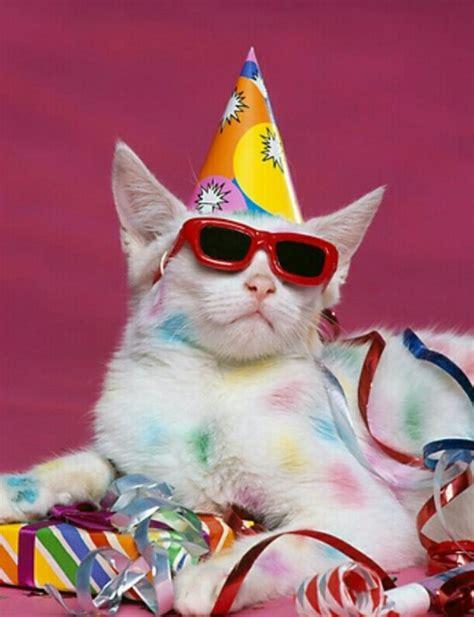 cat birthday 1 of cats i m so stylish cats