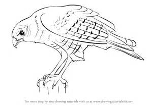 how to draw a hawk learn how to draw a hawk bird of prey step by step