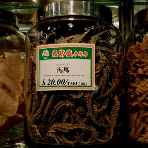 dried sea fans for sale picture war forum topic minecraft