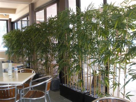 Balcony Screening Plants by Screening Plants