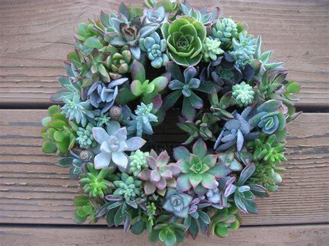 2 colorful living succulent centerpiece wreaths wedding