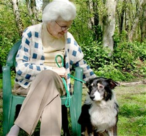 forever paws puppy rescue indiana seniors for seniors 187 paws