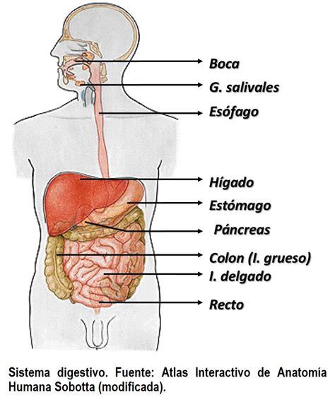 aparato digestivo sistema genitourinario pictures to pin on pinterest
