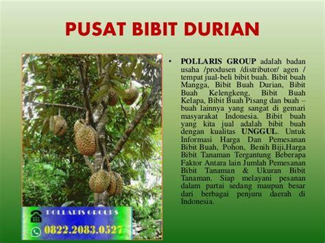 Agen Bibit Durian Bawor jual bibit durian di malang jual bibit durian bawor jual