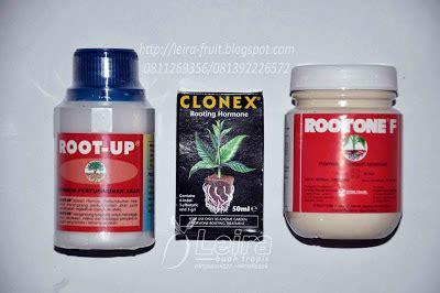 Zpt Dan Fungisida Root Up Untuk Stek Maupun Cangkok mencangkok dengan bahan quot floral foam quot leira buah tropis