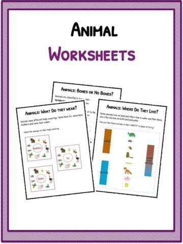 Butterfly Facts Worksheet
