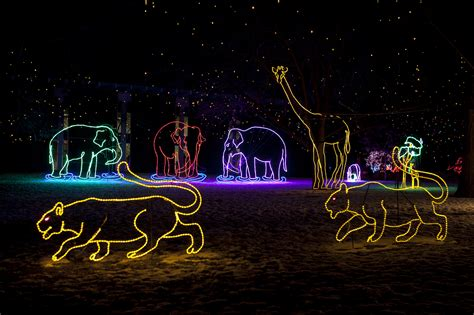 gulf zoo lights denver zoo s zoo lights shines as bright in 2015
