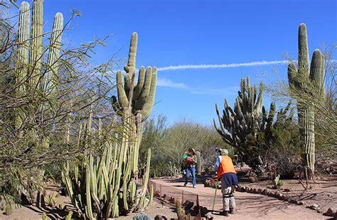 Desert Botanical Garden Tucson Arizona Ao Sul Do Grand O Deserto De Sonora