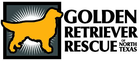 golden retriever rescue dallas fort worth golden retriever rescue of