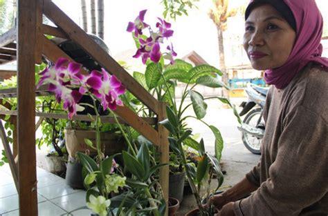 Pupuk Untuk Bunga Agar Cepat Berbunga pupuk anggrek agar cepat berbunga bibitbunga