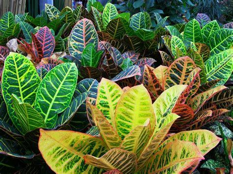 piante ornamentali da giardino le piante piante da giardino piante