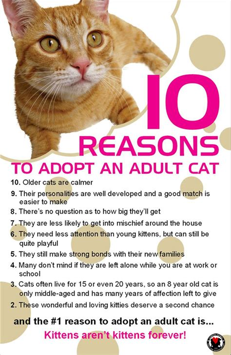8 Reasons To Adopt A Pet From A Shelter by Casa Camano Animal Shelter Association