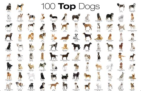 Breeds By Picture the most favorite breeds a to z with breeds