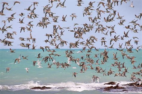 migratory birds don t train for migrations earth earthsky