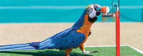 best 28 bird show exotic bird shows rapid city