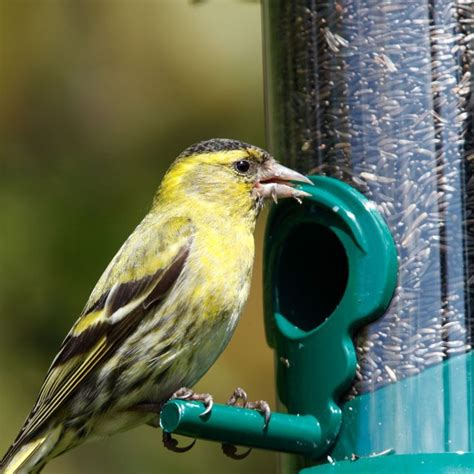 feeding wild birds what ejse besides seed 17 best images about bird seed on bird feeders birds and different types of