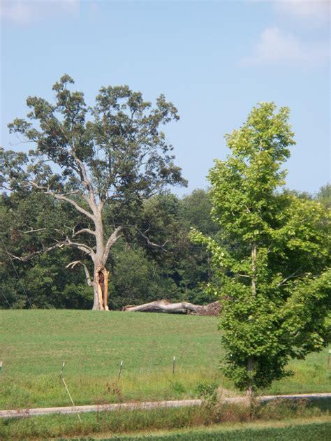 shawshank redemption tree 17 best images about shawshank on pinterest struck by