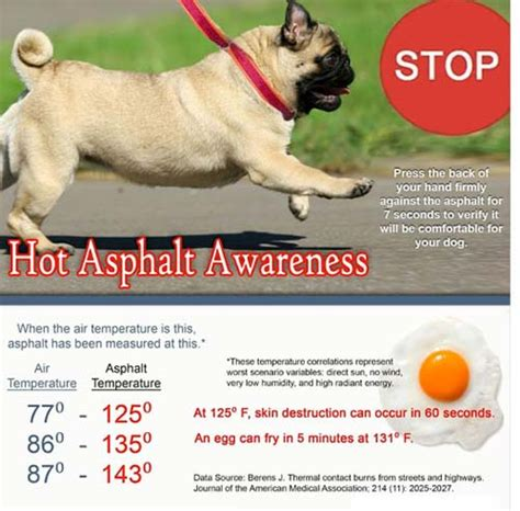 comfortable temperature for dogs summer pet tips hot asphalt and your dog
