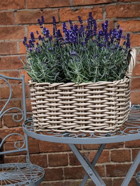 ivyline square rattan plant pots natural set