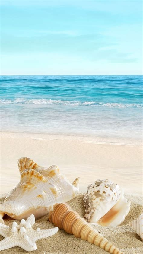 nature sunny ocean seaside beach shells iphone