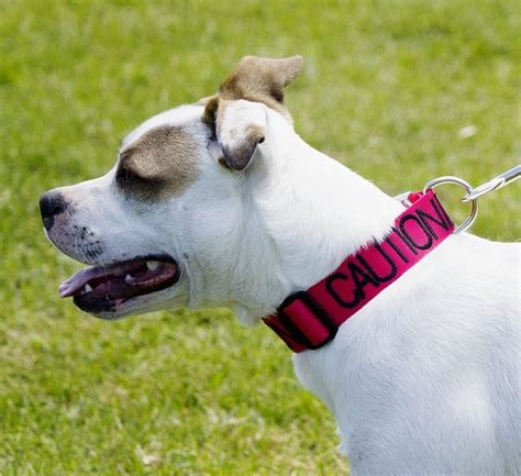 can puppies be around other dogs color coded friendly collars