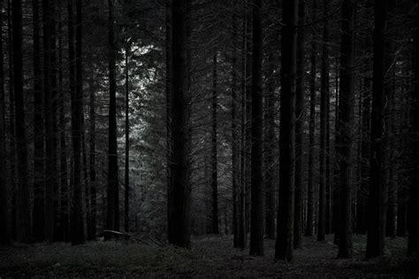 el bosque oscuro the 8466660925 cuando los bosques son de miedo bosques encantados