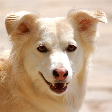can dogs get pink eye from humans can dogs get pink eye from humans