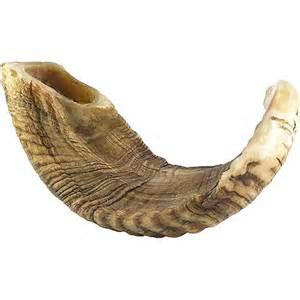 shofer horn ram s horn shofar 19 20 inches
