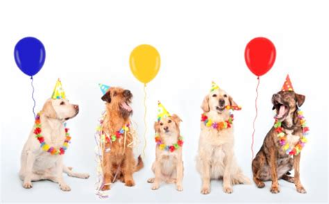 Happy Birthday Clip With Dogs Free by Is Five Today Second Chance Aiha Dogs