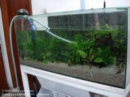 artikel cara membuat aquarium dinding cara menjernihkan air aquarium contoh artikel