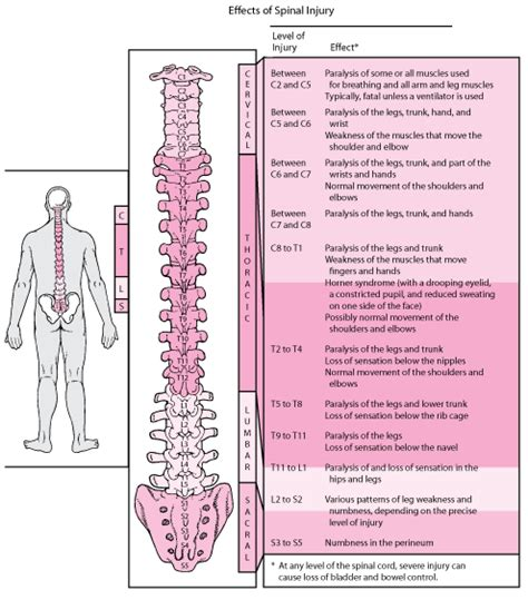 c section nerve damage overview of spinal cord disorders brain spinal cord