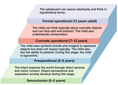 biography development definition piaget s stages of cognitive development piaget s theory